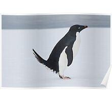 Penguin Pooping Poster