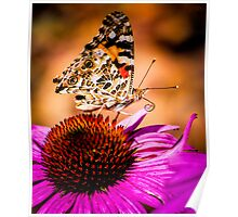 Colors of Nature Poster
