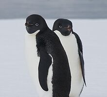 Penguin Pair by JessieRabbit