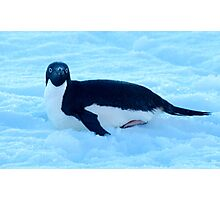 Penguin 1 Photographic Print
