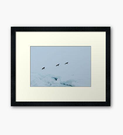 Penguin Chase Framed Print