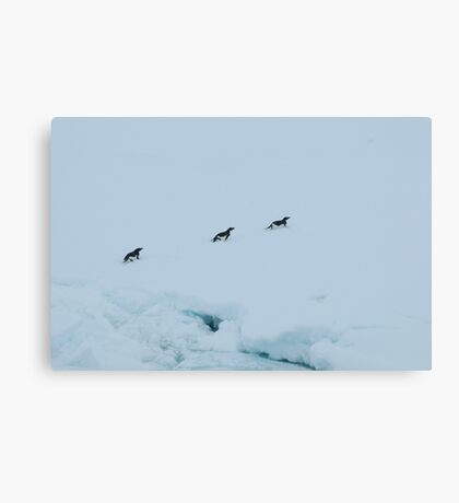 Penguin Chase Canvas Print