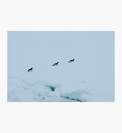 Penguin Chase Photographic Print