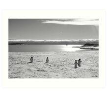 Penguin black and white Art Print