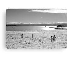 Penguin black and white Canvas Print