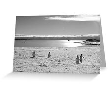 Penguin black and white Greeting Card