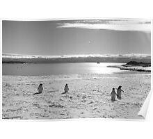Penguin black and white Poster