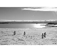 Penguin black and white Photographic Print