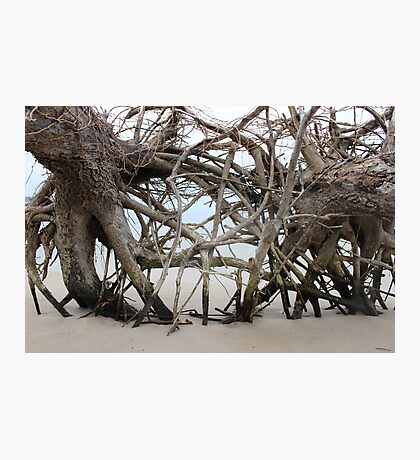 Roaming Roots Photographic Print