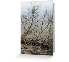 Bare Beach Trees Greeting Card