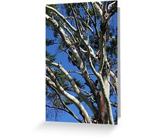 Tree Branches and Sky Greeting Card