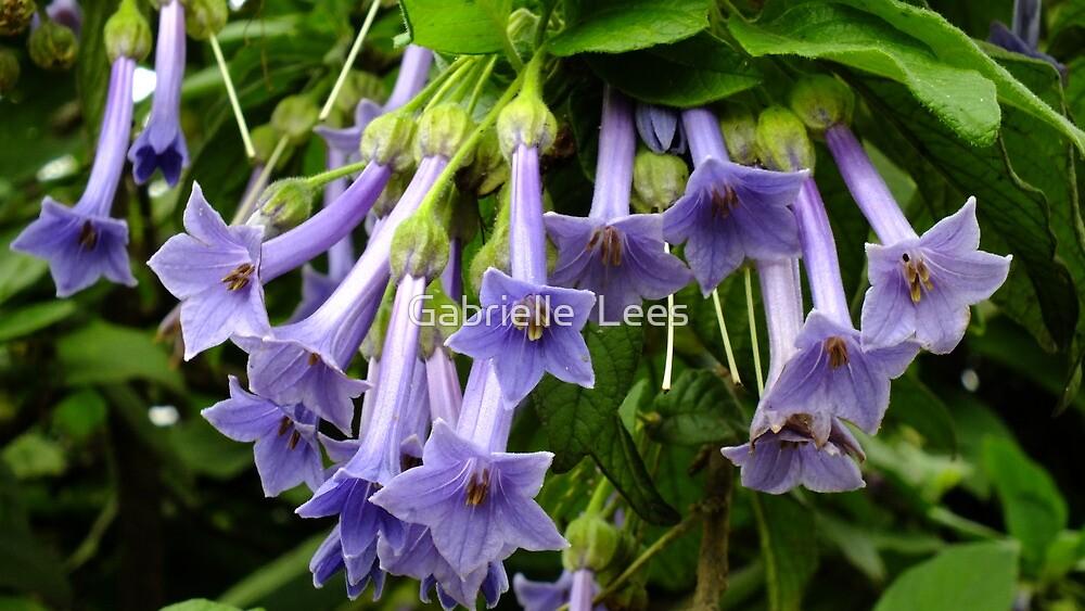 Iochroma Grandiflora by Gabrielle  Lees
