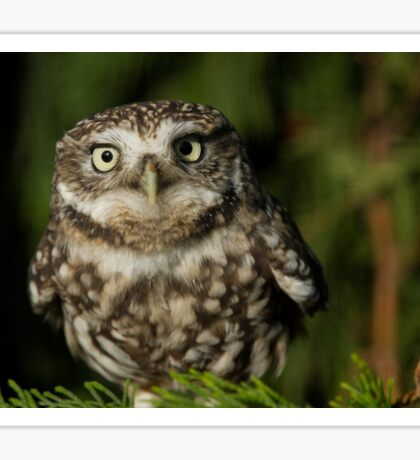 Whoooo are you looking at? Sticker
