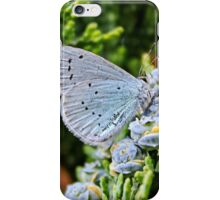 Holly Blue Butterfly iPhone Case/Skin