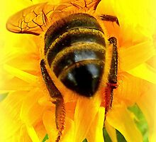 The bee's bum by ©The Creative  Minds