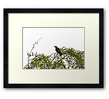 Black Bird Sitting in a Tree Framed Print