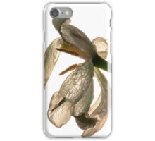 contre-jour of a dead white tulip iPhone Case/Skin