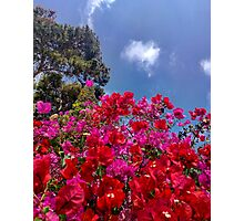 Red & pink flower explosion Photographic Print