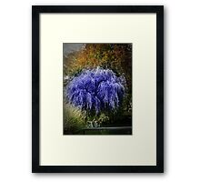 punk willow Framed Print