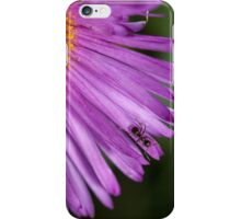 black ant on a pink aster patel iPhone Case/Skin