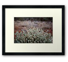 Bush  Garden Framed Print