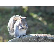 Squirrel On The Stone Photographic Print