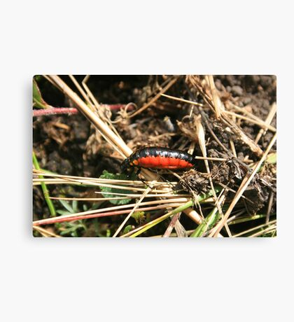 Orange and Black Insect Canvas Print
