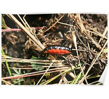 Orange and Black Insect Poster
