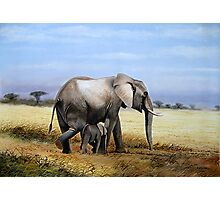Mothers Love  Elephant and her Calf oil painting gifts Photographic Print