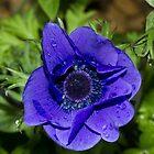 New Blue by JanSmithPics