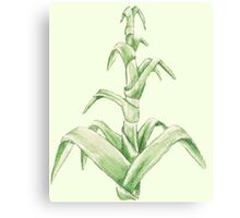 blade of grass Canvas Print