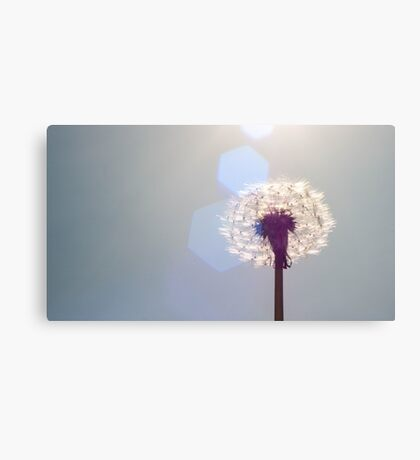 dandelion fluff in the sun with flare Canvas Print