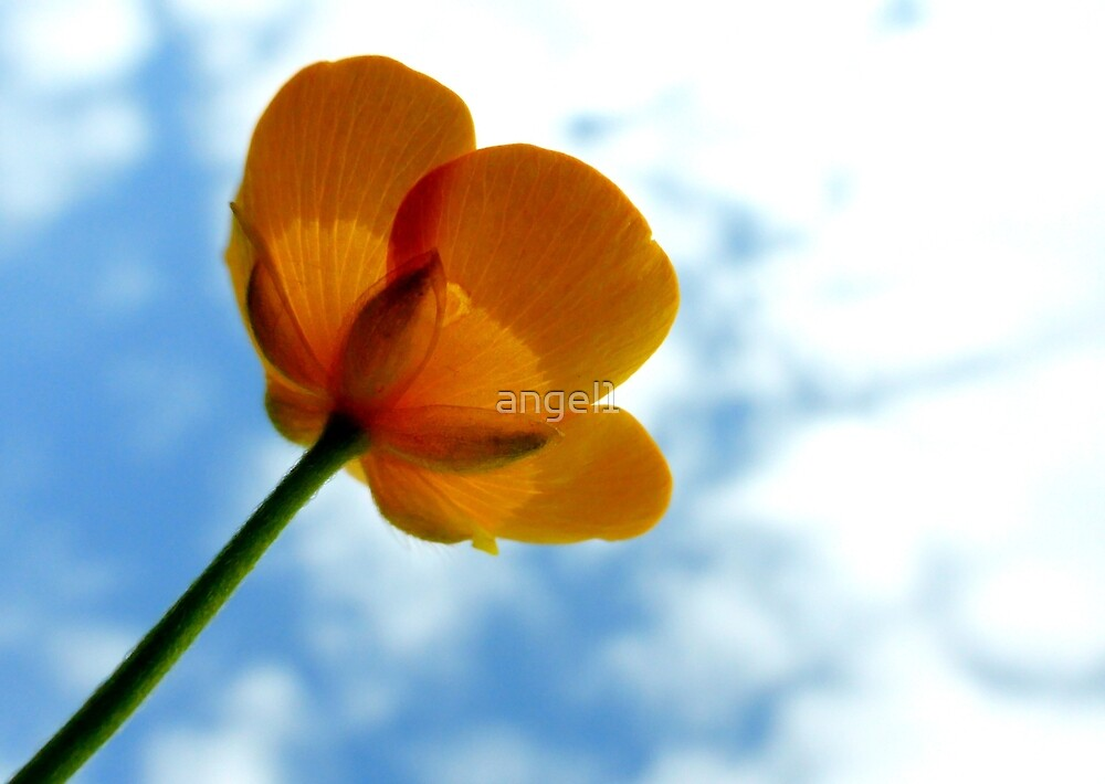 Buttercup by ©The Creative  Minds