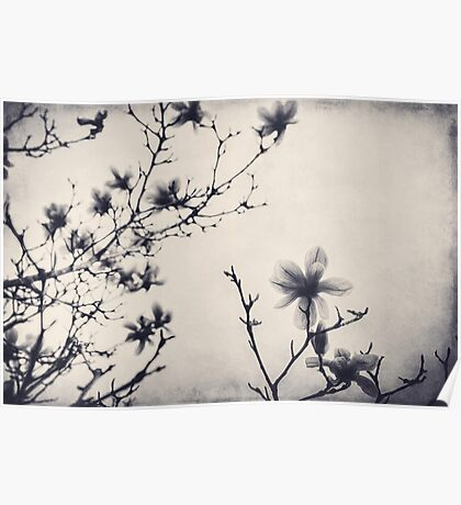 Tree Blossoms in Black and White Poster