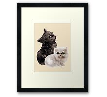 Cute Kittens Framed Print