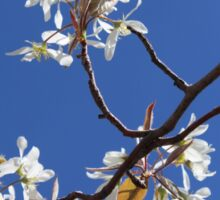 Blue Skies and White Blooms Sticker