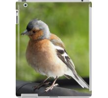 Curious chaffinch iPad Case/Skin