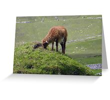 Soay lamb on cleit Greeting Card