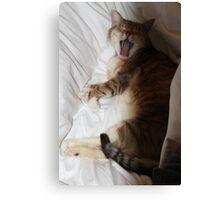 Yawning Cat Canvas Print