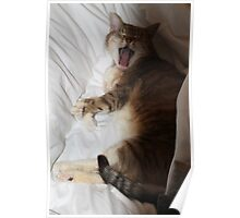Yawning Cat Poster