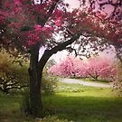 Spring Meadow by Jessica Jenney