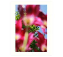 Purple Tulips 04 Art Print