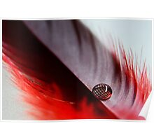 Red Feather Poster