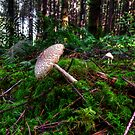 Boom-Boom-Boom ~ Wild Mushrooms ~ by Charles & Patricia   Harkins ~ Picture Oregon