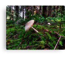 Boom-Boom-Boom ~ Wild Mushrooms ~ Canvas Print