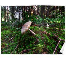 Boom-Boom-Boom ~ Wild Mushrooms ~ Poster