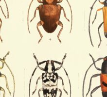 Aid to the identification of insects Charles Owen Waterhouse 1890 V1 V2 187 Various Sticker