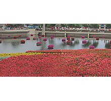 A Panorama of Color!  Photographic Print