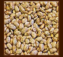 Dried Bean 3 by Carolyn Clark