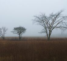 Three Trees in Fog by Timothy  Ruf